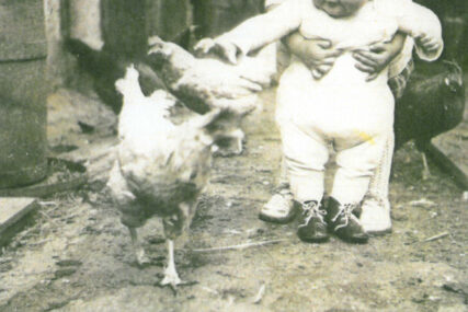Hühner satteln