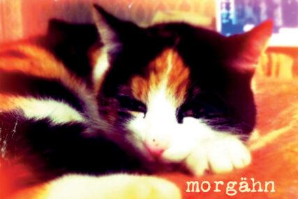 Morgähn